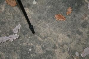 Roca al terra al mig del camí cap a Tavèrnoles amb possibles gravats rupestres