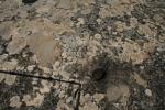 Cassoleta a la roca al costat dela