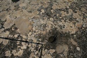 Cassoleta a la roca al costat de la Torre de Vallferosa (Torà, Segarra)