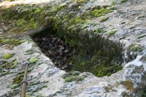 Toma antropomorfa a la roca de nen entre les restes del poble de Vallferosa (Torà, Segarra)