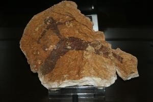 Museu de la Valltorta. Arquer