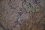 Pintures rupestres de la Cova dels Cavalls. Barranc de laValltorta