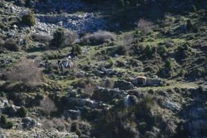 Ramon Viñas i d'altres pujant a la Cova Remígia pel Camí de la Font