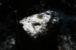 Pedra amb inscultures de Collserola ambneu
