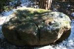 Pedra amb inscultures deCollserola