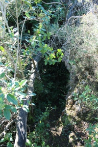 Entrada de la Cova de l'Olla (Aiguaviva, El Montmell)