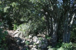 Avenc o entrada superior de la Cova de l'Olla (Aiguaviva, ElMontmell)