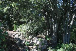 Avenc o entrada superior de la Cova de l'Olla (Aiguaviva, El Montmell)