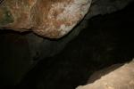 Rat Penat a la Cova de l'Olla (Aiguaviva, ElMontmell)