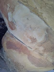 Pintures rupestres de la Balma dels Punts. L'Albi, les Garrigues