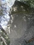 L'indi maia al Bosc màgicd'Orrius