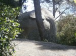 L'elefant al Bosc màgicd'Orrius